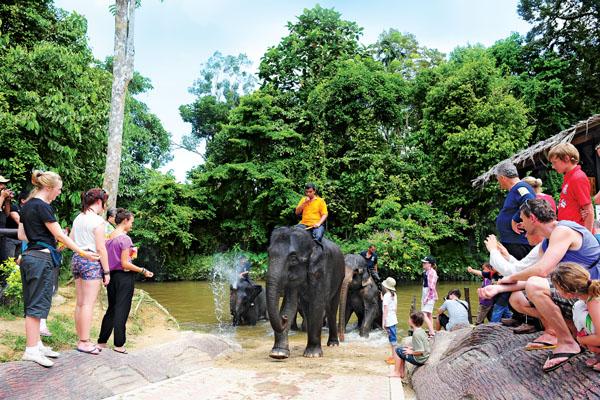 kuala-gandah-elephant-08